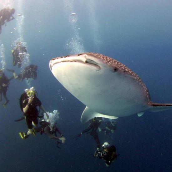 Dykkertur til Filippinerne